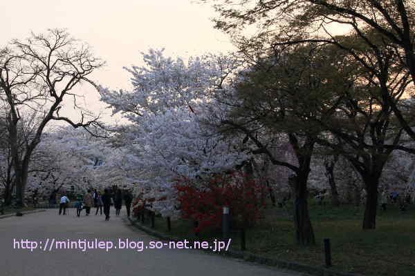 IMG_0381.JPG